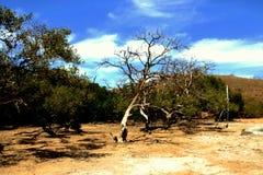 Ландшафт острова Komodo засушливый Стоковое Изображение RF