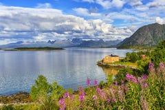 Ландшафт островов Lofoten, Норвегия стоковое изображение rf