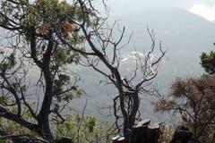 Ландшафт от горы с деревьями Стоковая Фотография