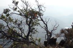 Ландшафт от горы с деревьями Стоковое Изображение