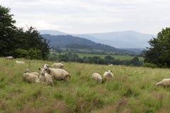 Ландшафт от Beskydy, красивые горы в северной Богемии, чехии Стоковое Изображение RF