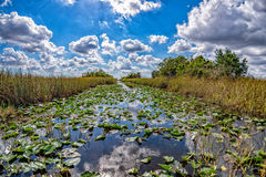 Ландшафт панорамы взгляда болотистых низменностей Флориды Стоковые Изображения RF