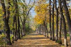 Ландшафт парка в осени стоковое фото