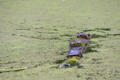 Ландшафт парка Никсона в Loganville, Пенсильвании Стоковое Фото