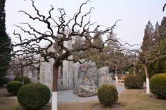 Ландшафт парка Пекина Стоковое Изображение RF