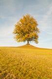 Ландшафт падения с деревом на горизонте и голубом небе Стоковые Фото