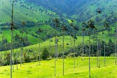 Ландшафт пальм воска Стоковые Фото
