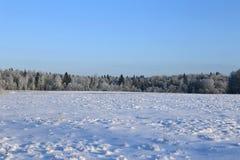 Ландшафт покрытого снег поля и деревья елевы и берез Стоковое Изображение