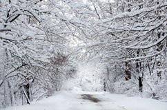 Ландшафт покрытый снегом волшебный Стоковое Изображение