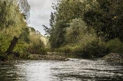Ландшафт потока реки Стоковая Фотография