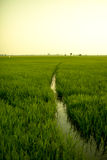 Ландшафт поля в спокойном моменте Стоковое Изображение