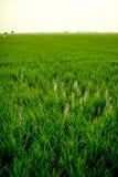 Ландшафт поля в спокойном моменте Стоковая Фотография RF