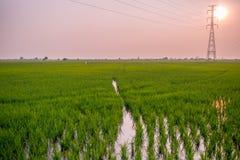Ландшафт поля в спокойном моменте Стоковая Фотография