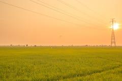 Ландшафт поля в спокойном моменте Стоковое фото RF