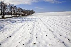 Ландшафт поля зимы Стоковое Изображение