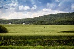 Ландшафт поля овса Стоковая Фотография RF