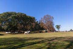 Ландшафт поля лошади всадника Стоковое Изображение RF