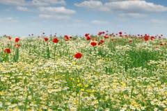 Ландшафт поля полевых цветков стоковое изображение