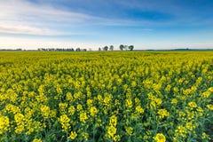 Ландшафт поля рапса Стоковые Фото