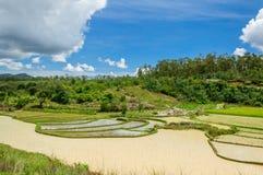 Ландшафт поля риса Стоковые Изображения RF