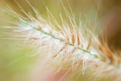 Ландшафт поля травы на восходе солнца Стоковая Фотография RF