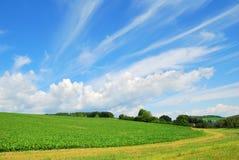 Ландшафт поля фермы сельской местности стоковое фото