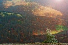 Ландшафт предпосылки дерева Нового Года Frost красивый осени для Стоковое Изображение