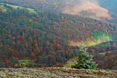 Ландшафт предпосылки дерева Нового Года Frost красивый осени fo Стоковое Изображение RF