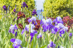 Ландшафт предпосылки радужки в садах Nikitsky Стоковое Изображение RF