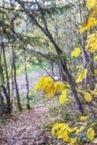 Ландшафт предпосылки с желтым цветом выходит против дороги леса Стоковые Фотографии RF