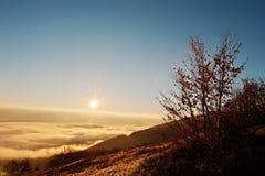 Ландшафт предпосылки trrees осени изумительный живописный Carpat Стоковые Фотографии RF