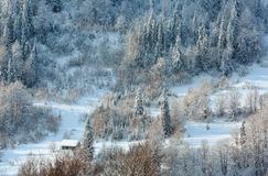 Ландшафт прикарпатских гор зимы украинский Стоковое Изображение