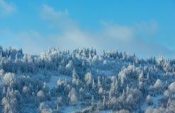 Ландшафт прикарпатских гор зимы украинский Стоковое фото RF