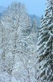 Ландшафт прикарпатских гор зимы Стоковые Фото