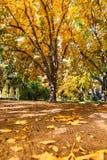 Ландшафт природы дерева осени дуба стоковые изображения