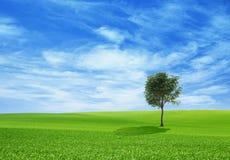 Ландшафт природы с молодым деревом на холме Стоковая Фотография