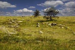 Ландшафт природы с облаками кумулюса Стоковое Изображение RF