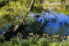 Ландшафт природы, reflectiong ветвей дерева на голубых речных водах Стоковые Изображения