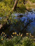 Ландшафт природы, reflectiong ветвей дерева на голубых речных водах Стоковое Изображение RF