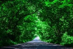 Ландшафт прямой дороги под деревьями Зеленый тоннель и пустая дорога асфальта Стоковые Фото