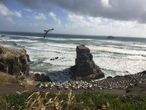 Ландшафт птиц пляжа Стоковые Изображения
