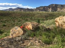 Ландшафт пустыни весеннего времени Стоковое Изображение