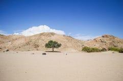 Ландшафт пустыни и горы с солитарным деревом в Намибии стоковые изображения
