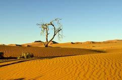 Ландшафт пустыни Намибии Стоковое Изображение