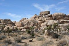Ландшафт пустыни национального парка дерева Иешуа Стоковая Фотография