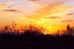 Ландшафт пустыни на заходе солнца Стоковое Фото