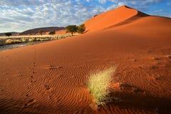 Ландшафт пустыни Стоковое Изображение