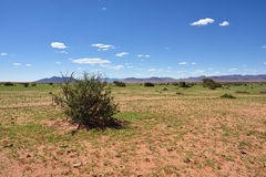 Ландшафт пустыни Namib, Намибия Стоковая Фотография RF