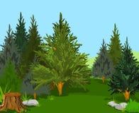 ландшафт пущи Стоковое Фото