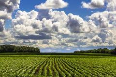 Ландшафт растущего поля земледелия Стоковое Изображение